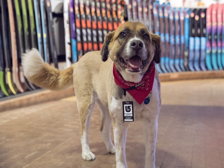 Burton dog in the Flagship Store